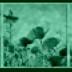 Set tablou 3 piese fosforescent Maci salbatici