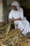 Tutun DOKHA ARABIAN / 50 seminte pt semanat