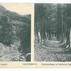 4726 - BAIA-MARE, Park, Romania - old postcard - used - 1912, Circulata, Printata