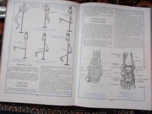 Atlas de anatomie umana - Mircea Ifrim