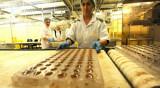 Angajare fabrica iaurturi germania