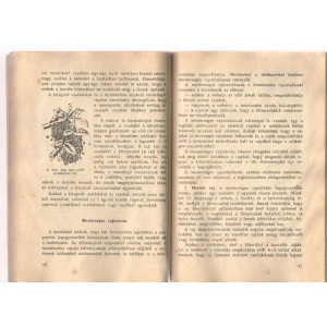 Meheszet (Albinaritul)/Bukarest 1957 lb. maghiara