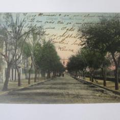 Calarasi-Bulevardul Traian,carte postala circulata 1908, Printata