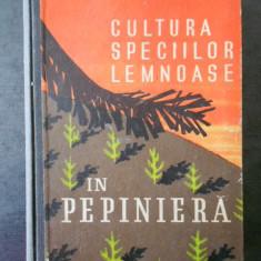 STEFAN RUBTOV - CULTURA SPECIILOR LEMNOASE IN PEPINIERA
