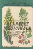 Sa ne cunoastem plantele medicinale, proprietatile lor terapeutice si modul de folosire