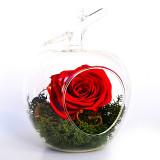 Cumpara ieftin Aranjament trandafiri criogenati MF110