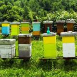In rate egale Matci imperecheate, familii de albine si roiuri