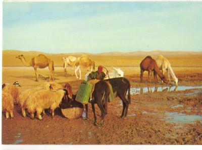 AD 1104 C. P. VECHE -JUDEAN DESERT - NEAR THE WELL, IN THE DESERT -ISRAEL foto