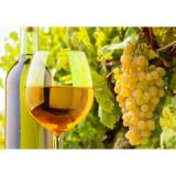 Vand vin alb, rosu si tuica din vin