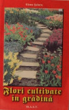 Elena Selaru - Flori cultivate in gradină