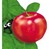 Mărul. Primii paşi