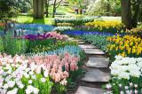 Bulbi Flori Toamna-Zambile, Lalele, Narcise, Iris, Crocus, Amaryllis