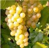 Vând vin alb și rosu
