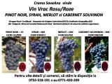 Vindem Vin Vrac Rosu/Roze  Pino Noir , Shiraz, Merlot si Cabernet Souvinon