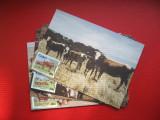 MAXIME - CISKEI - AFRICA DE SUD