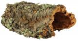 Decor Scoarta L Pana La 55 cm 76406