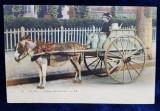 VICHY - LAITIERE BOURBONNAISE - LAPTAREASA , CARTE POSTALA ILUSTRATA , POLICROMA , CIRCULATA , DATATA 1910