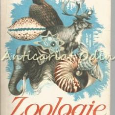 Zoologie. Manual Pentru a VI-a - C. Bogoescu, A. Stoicescu, Al. Dabija