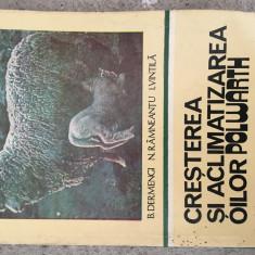 CRESTEREA SI ACLIMATIZAREA OILOR POLWARTH , 1981