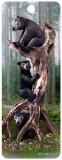 Semn de carte 3D - Black Bears