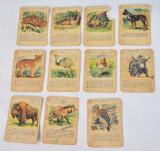 Lot cartonase Animale din Continente A