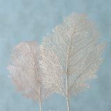 Cumpara ieftin Ramura decorativa artificiala Blatt Rose / Ivoir, Modele Asortate, H60 cm