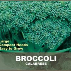Seminte Broccoli Calabrese, Hortitops, 2 g