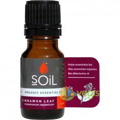 Ulei Esential de Scortisoara (Cinnamon) Ecologic/Bio 10ml