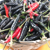 Ardei iute BLACK COBRA  - 10 seminte pentru semanat
