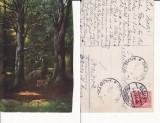 Ilustrata animale -cerbi-vanatoare, Circulata, Printata
