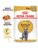 Royal Canin British Shorthair Adult hrana umeda pisica, 12 x 85 g