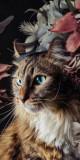 Cumpara ieftin Husa Personalizata HUAWEI Y5 2017 \ Y6 2017 Pisica