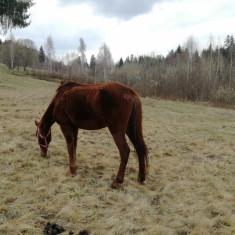 Caii de vanzare