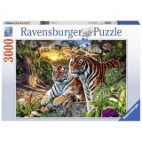 Puzzle Tigri, 3000 piese, Ravensburger