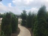 Teren 1280 mp + Fundație casa Valu lui Traian, Teren intravilan