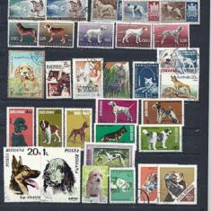 LOT DE 31 timbre CAINI DE COMPANIE, stampilate DIFERITE, S32(2)
