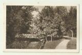 Cp Craiova : Parcul Bibescu - circulata 1925, timbre, Fotografie