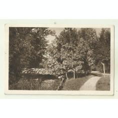 cp Craiova : Parcul Bibescu - circulata 1925, timbre