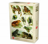 Cumpara ieftin Puzzle Encyclopedia - Frogs, 1000 piese