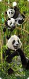 Semn de carte 3D - Pandas