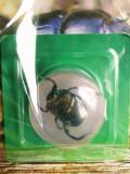 Minunile Naturii - Insectă : Gândacul de bălegar , revistă plus specimen 25 lei