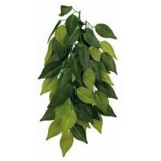 Plantă de terariu FIKUS - agăţabilă 20 x 50 cm