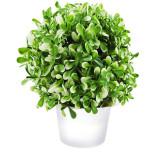 Cumpara ieftin Planta artificiala verde cu alb in ghiveci alb, 20 cm