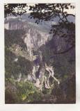 bnk cp Lacu Rosu - Cheile Bicazului - necirculata