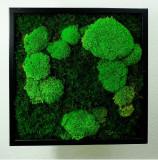 Tablou vegetal ARTFLORA Premium MixMoss 25x25cm