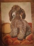 Cumpara ieftin Tablou Cățel, ulei pe carton, 35x25cm, Animale, Realism