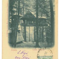 4755 - SINAIA, Prahova, Litho, Romania - old postcard - used - 1900