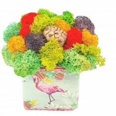 Cumpara ieftin Aranjament cu licheni naturali stabilizati, Flamingo, 7x7x10 cm