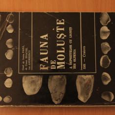 Fauna de Moluste a depozitelor cu ligniti din Oltenia