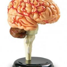 Macheta Creierul Uman Learning Resources, 31 piese, 5.6 x 17 x 23.4 cm, 8 - 12 ani
